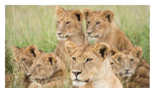 Afromaxx - Nord-Tansania-Reise- Afrika