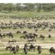 Safari Große Migration Serengeti Ndutu #Afromaxx