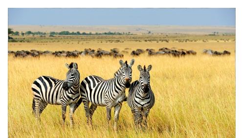 Tanzania big Migration Mara River