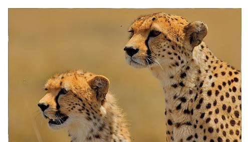 Tansania private Safari