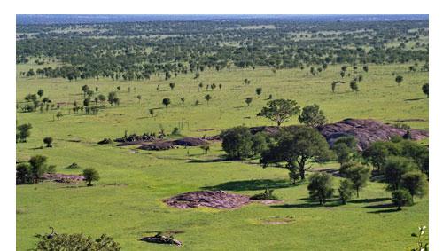 uhfladen-Tansania