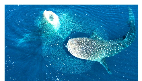 Mafia Island – Geheimtipp über und unter Wasser