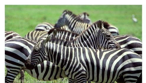 Ndutu Serengeti